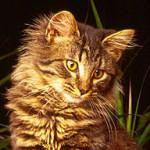 Feline History